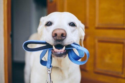 Alimentation croquettes chiens